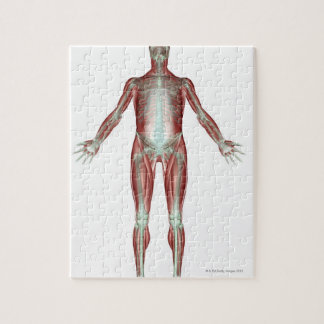 The Musculoskeletal System 4 Jigsaw Puzzle