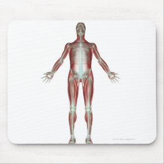 The Musculoskeletal System 4 Mouse Pad