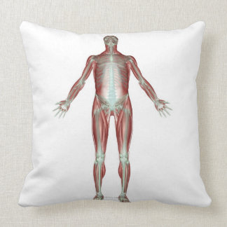 The Musculoskeletal System 4 Pillows