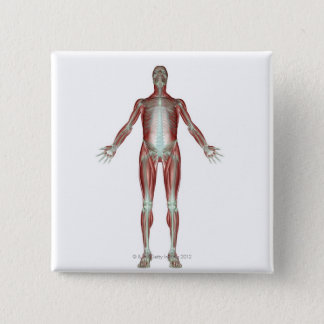 The Musculoskeletal System 4 Pinback Button