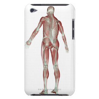The Musculoskeletal System 5 Barely There iPod Covers