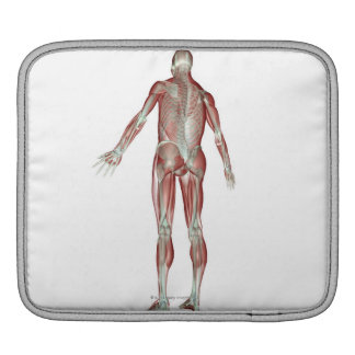 The Musculoskeletal System 5 Sleeve For iPads