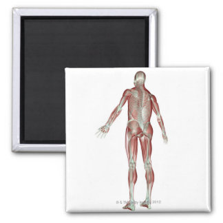 The Musculoskeletal System 5 Magnet