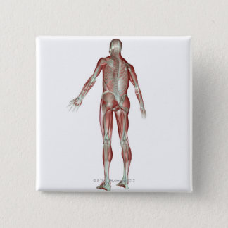 The Musculoskeletal System 5 Pinback Button