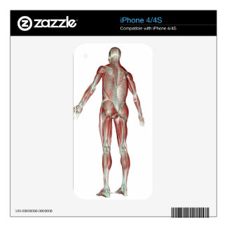 The Musculoskeletal System 5 Skins For The iPhone 4