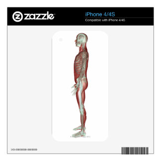 The Musculoskeletal System 6 Decals For iPhone 4S
