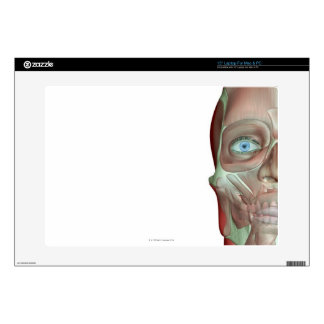 The Musculoskeletal System 7 Decal For Laptop
