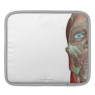 The Musculoskeletal System 7 iPad Sleeves