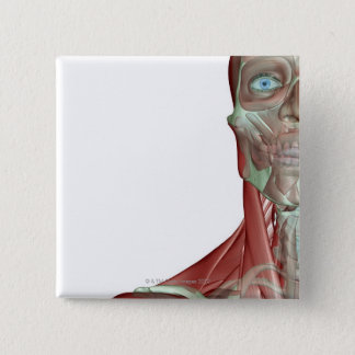 The Musculoskeletal System 7 Pinback Button