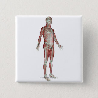 The Musculoskeletal System 8 Pinback Button