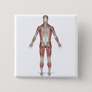 The Musculoskeletal System 9 Button