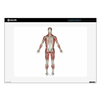The Musculoskeletal System 9 Decal For Laptop