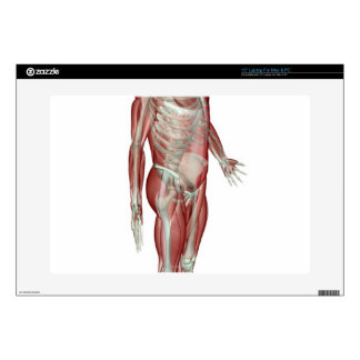 "The Musculoskeletal System Decals For 15"" Laptops"