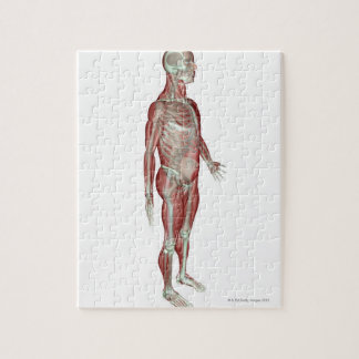 The Musculoskeletal System Jigsaw Puzzle