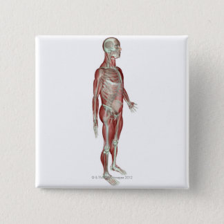 The Musculoskeletal System Pinback Button