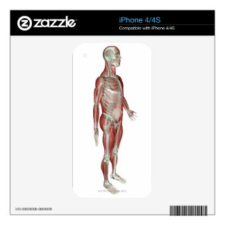 The Musculoskeletal System Skins For iPhone 4