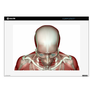 The Musculoskeletan of the Head and Neck 2 Skin For Laptop
