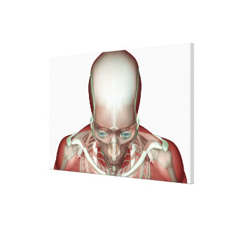 The Musculoskeletan of the Head and Neck Canvas Print