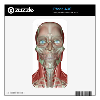 The Musculoskeletan of the Head and Neck Decals For The iPhone 4S