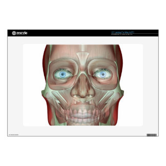 The Musculoskeletan of the Head and Neck Laptop Skins