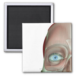 The Musculoskeleton of the Face 2 Inch Square Magnet