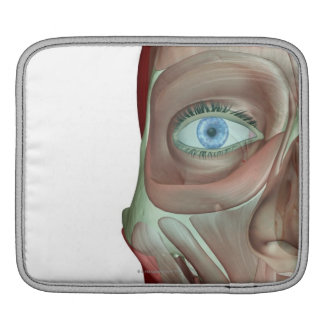 The Musculoskeleton of the Face Sleeve For iPads