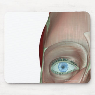 The Musculoskeleton of the Face Mouse Pad