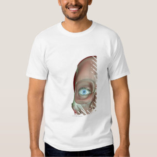The Musculoskeleton of the Face Shirts