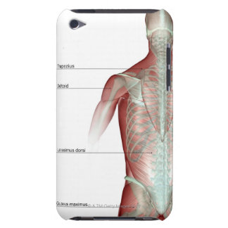The musculoskeleton of the upper body iPod touch case