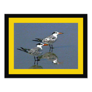 The MUSEUM Artist Series jGibney Birds2CocoaBeach1 Card