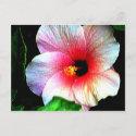 The MUSEUM Artitst Series jGibney Hibiscus72 postcard