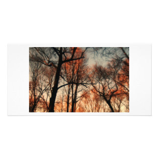 The Mythical Forest of Tellervo Photo Card