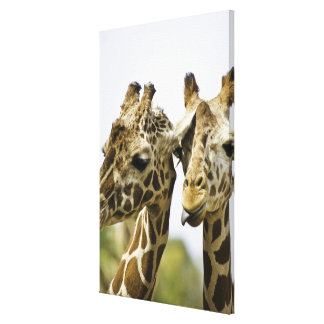 The name giraffe is derived from the Arab word Canvas Print