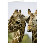 The name giraffe is derived from the Arab word Greeting Card