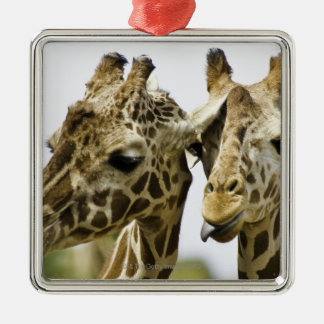 The name giraffe is derived from the Arab word Metal Ornament