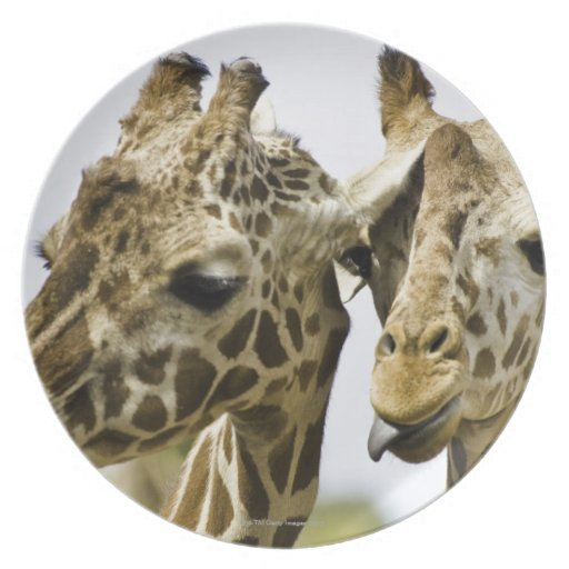 The name giraffe is derived from the Arab word Dinner Plates