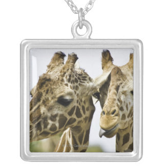 The name giraffe is derived from the Arab word Silver Plated Necklace