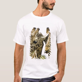 The name giraffe is derived from the Arab word T-Shirt