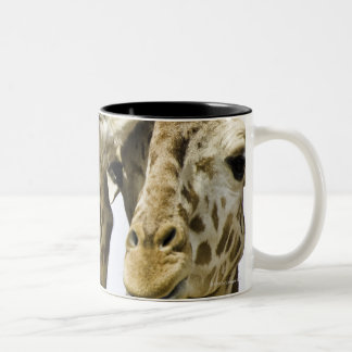 The name giraffe is derived from the Arab word Two-Tone Coffee Mug