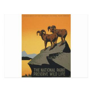 The national parks preserve wild life postcard