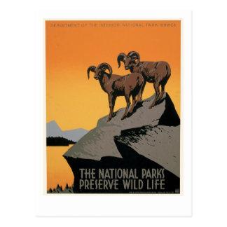 The National Parks Preserve Wildlife Postcards