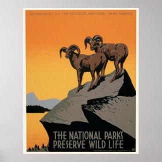 The National Parks Preserve Wildlife Poster