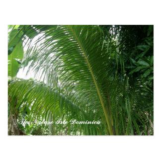 The Nature Isle Dominica Postcard