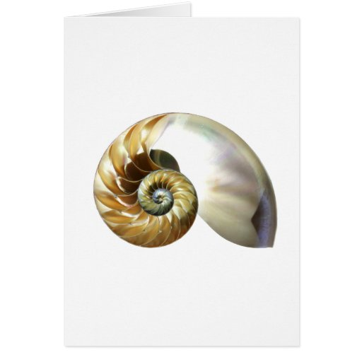 The Nautilus Shell Card