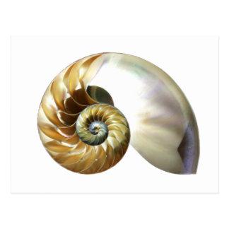 The Nautilus Shell Postcard
