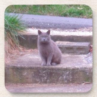 The Neighbors Grey Cat Beverage Coaster