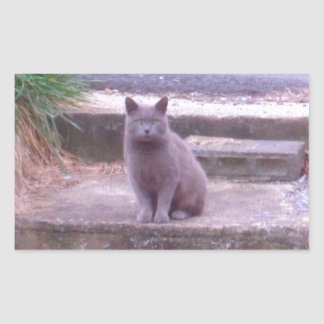The Neighbors Grey Cat Rectangular Sticker