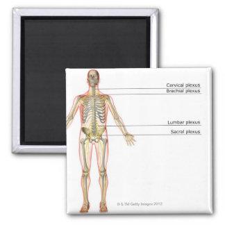 The Nervous System 2 Magnet
