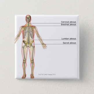 The Nervous System 2 Pinback Button
