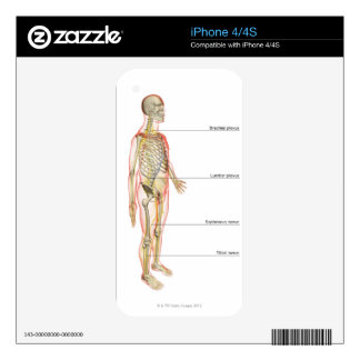 The Nervous System 3 Skin For The iPhone 4